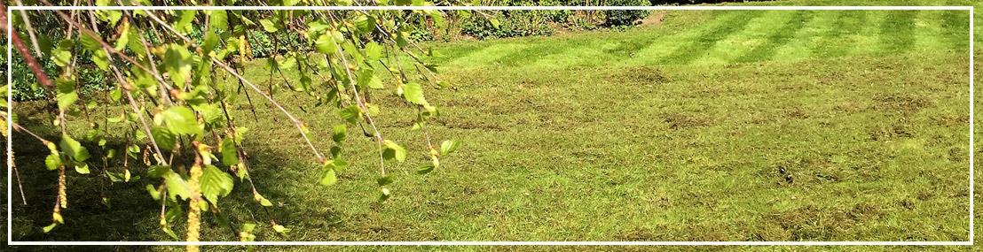 Nos services d\'entretien de jardin - Thomas Cavrois Green Keeper